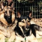 Erin (1979-1991)    Erin was a Seeing Eye dog who was not selected to complete the training. A protective loving family dog. Mopsy to right.